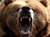 Oceľový medveď 2014 - najvrdšia silovo-vytrvalostná súťaž na Slovensku