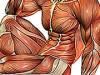 Ako zistiť, aký typ svalových vlákien je v mojom prípade dominantný?